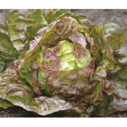 Salade pommé rouge